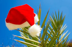 Christmas hat on palm tree Stock Photos