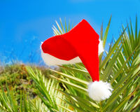 Christmas hat on palm tree Royalty Free Stock Photography