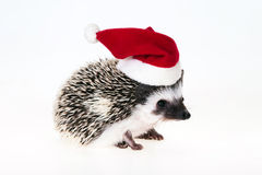 Christmas hedgehog Royalty Free Stock Photo