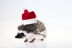 Christmas hedgehog Stock Image