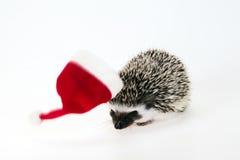 Christmas hedgehog Stock Images