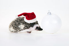 Christmas hedgehog Royalty Free Stock Image