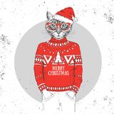 Christmas Hipster fashion animal cat dressed a New Year hat Royalty Free Stock Photography