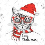 Christmas Hipster fashion animal cat dressed  a New Year hat Stock Image