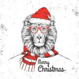 Christmas Hipster fashion animal lion dressed  a New Year hat and scarf Royalty Free Stock Photography