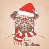 Christmas Hipster fashion animal pug-dog dressed  a New Year hat Stock Photos