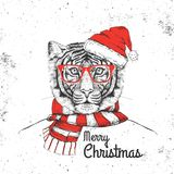 Christmas Hipster fashion animal tiger dressed  a New Year hat Royalty Free Stock Photography