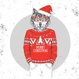 Christmas Hipster fashion animal wolf dressed a New Year hat Royalty Free Stock Images