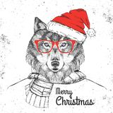 Christmas Hipster fashion animal wolf dressed  a New Year hat Stock Photography