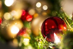 Christmas Holiday Colors. Tree display Royalty Free Stock Image