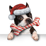 Christmas Holiday Dog. Pet sign for veterinary medicine festive winter advertising and marketing message with a cute dog biting into a bone made of candy cane Royalty Free Stock Photos