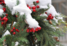 Christmas holiday evergreen wreath covered with real snow. Snow covered holiday Christmas wreath with evergreen branches and red berries royalty free stock image