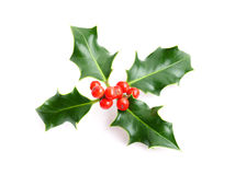 Christmas holiday holly decoration Royalty Free Stock Image