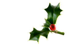Christmas holly. A sprig of Christmas holly with a red berry stock image