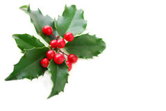 Christmas Holly. Leaves and berries isolated on white background royalty free stock photos