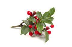 Christmas Holly. Over White background (With Clipping Path royalty free stock images