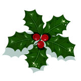 Christmas Holly Stock Image