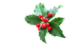 Christmas Holly. Leaves and berries isolated on white background stock image