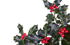 Christmas  holly. Christmas holly with red berries in the corner isolated on white Stock Image