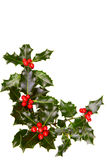 Christmas holly. With red berries royalty free stock images