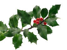 Christmas holly. Isolated on white stock photography