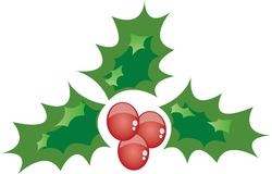 Christmas Holly. In a Christmas holly on a white background Stock Images