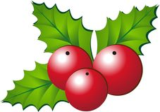 Christmas holly. Vector illustration of christmas holly Royalty Free Stock Photo