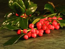 Christmas holly berries Stock Photos