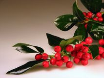 Christmas holly berries Stock Image