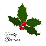 Christmas holly berries icon. Vector illustration. Christmas holly berry icon collection. Vector illustration Royalty Free Stock Photo