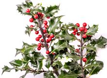 Christmas holly with berries royalty free stock photos