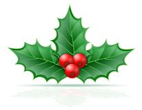 Christmas holly berries stock vector illustration. Isolated on white background Stock Photography