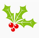 Christmas holly berry Stock Image