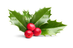 Christmas holly berry leaves decoration Stock Photography