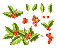 Christmas Holly Berry Set. Vector Illustration Stock Images