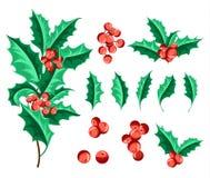 Christmas Holly Berry Set. Vector Illustration Stock Photos