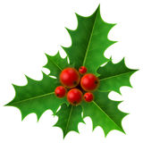 Christmas holly berry  on white background Royalty Free Stock Photos