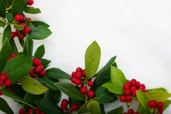 Christmas Holly Border. Holly and berries making a border on a white fur background, Christmas holly border royalty free stock photo
