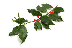 Christmas Holly branch Royalty Free Stock Photos