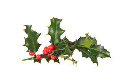 Christmas holly branch royalty free stock images