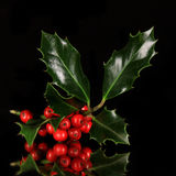Christmas holly branch Stock Images
