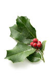Christmas Holly. With bright red berries covered in snow stock image