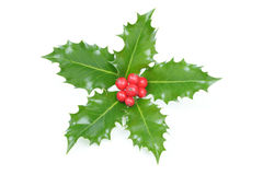Christmas holly decoration Royalty Free Stock Photography