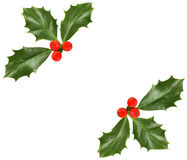 Christmas holly  - design element Royalty Free Stock Image