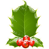 Christmas holly frame. Christmas and New Year background. Vector holly frame isolated on white Stock Photography