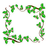 Christmas holly frame - vector background. The vector illustration of beautiful christmas holly branch, Winter Festival Brushes,  eps 10 Stock Image
