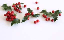 Christmas holly Ilex aquifolium isolated on white table background. Evergreen leaves with red berries. Empty space for holiday tex royalty free stock photography