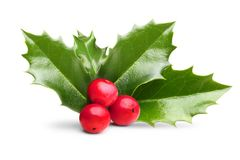Christmas Holly leaves and berries Royalty Free Stock Photography