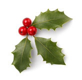 Christmas Holly. Holly Leaves and Red Berries Isolated on White Background royalty free stock images