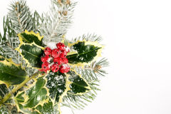 Christmas Holly & Pine. Holly, pine and red berries covered with snow stock image